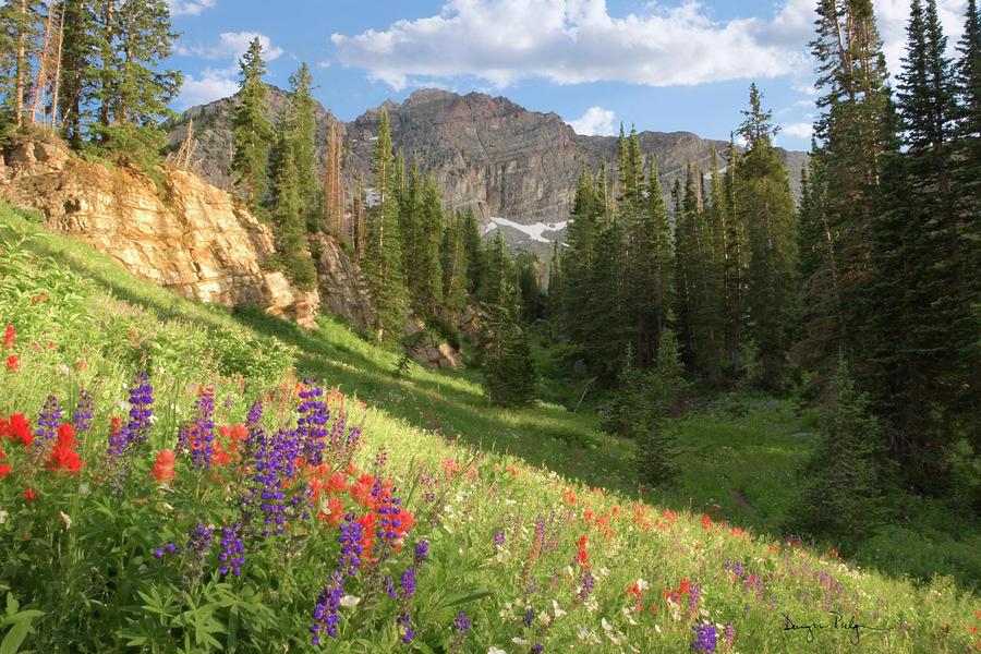 albion-basin-wasatch-mountains-utah-utah-images